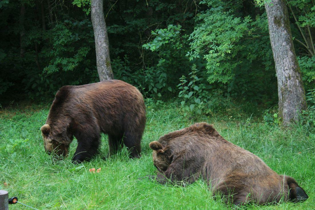 Bären-Wald