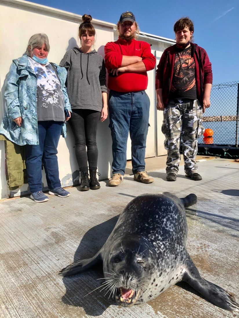 Seehund Meeres-Zentrum Warnemünde