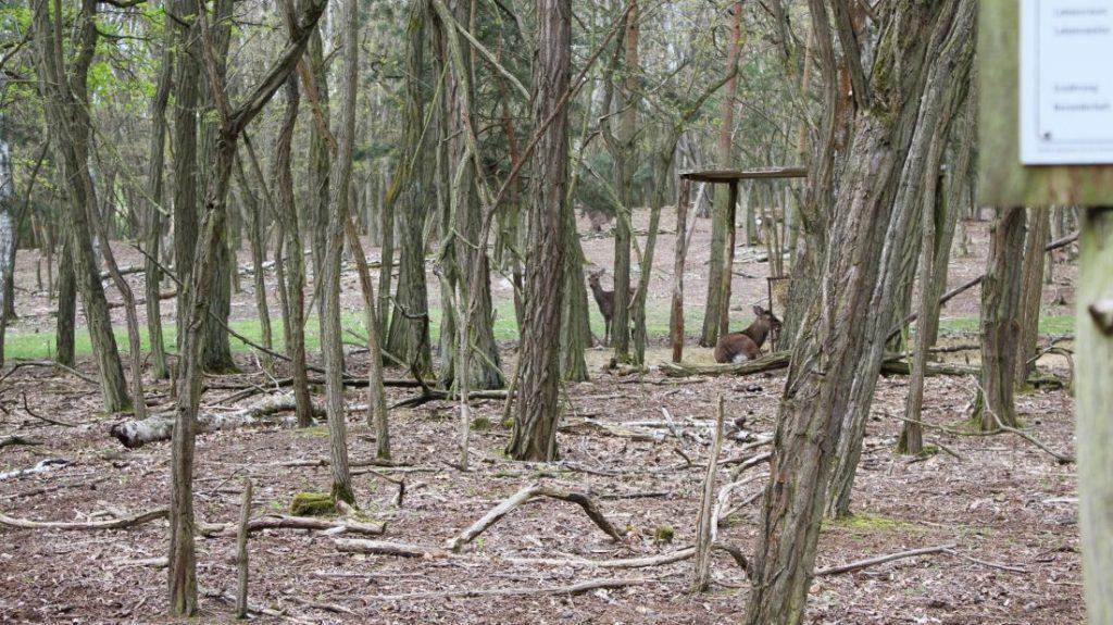 Im Wild-Park Wriezen - die Rehe