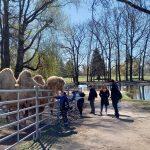 die Dienstags-Gruppe und Kamele